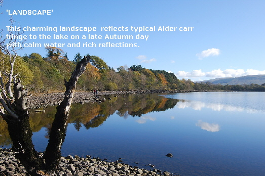 'LANDSCAPE'
