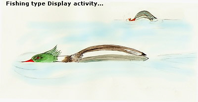 Fishing type Display activity...