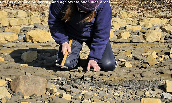Fossils are used to identify and age Strata over wide areas...